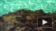 В Китае нашли зелёную водоросль возрастом в миллиард лет
