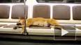 Топ-метро: забавные животные из подземки Петербурга