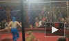Девочка, искусанная львицей в цирке на Кубани, находится в коме