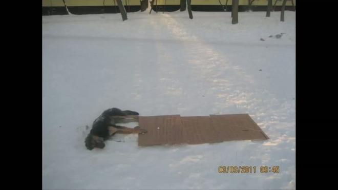 Собачий труп и картонные угрозы. Шокирующее убийство в Кировском районе