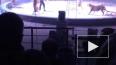 В Петербурге уволили четвертого директора Цирка на ...