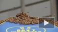 Видео из Нью-Йорка: Более 30 тысяч пчел облюбовали ...