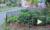 Жуткие новости из Петербурга: на газоне во Фрунзенском районе наши труп