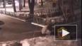 Видео: В Москве пенсионерку жестко избил мужчина с собак...