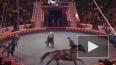 Умер народный артист и цирковой наездник Тамерлан ...