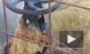 Видео: на Сиреневом бульваре прорвало трубу