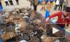 """Вьетнамские полицейские конфисковали несколько тысяч """"съедобных"""" кошек"""