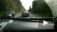 На трассе между Сиверским и Куровицы сбили лося