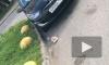 Пакет с замороженной курицей упал с небес на лобовуху Hyundai в Петербурге