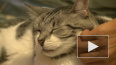 Минсельхоз России предложил маркировать домашних животны...