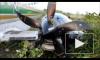 Пассажиры сняли на видео, как в Непале самолет сел мимо посадочной полосы