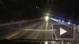 Видео: В Монтане бобёр с деревом парализовал движение ...