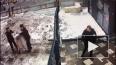 Видео: полицейские задержали наркомана-насильника ...