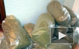 В Петербурге наркоконтроль раскрыл организованную наркобанду