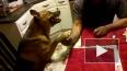 Армрестлинг с собакой-недовольнякой)))