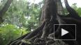 """У деревьев нашли способность """"передавать знания"""" по насл..."""