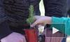 Видео: в Выборгском районе дети и представители власти вместе посадили 8,5 гектаров нового леса