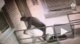 Видео: Пёс спас ростовчанку от убийцы с ножом