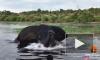 Видео: слон напал на лодку