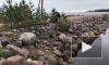 Видео: В Выборгском районе петербуржцы спасли тюлененка