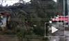 В Осиновой Роще упавшее дерево накрыло целый магазин