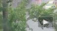 Тропический ливень с грозой накрыл Петербург: фото ...