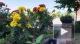 Видео: Выборг радует горожан яркими красками