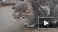 """Толстому коту и его хозяину подарят акции """"Аэрофлота"""""""