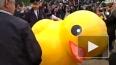 """Видео: """"арестованную"""" в Петербурге утку могут доставить ..."""
