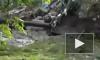Станицы вокруг Крымска задыхаются от разлагающихся трупов животных