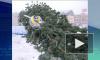 Ураган свалил главную новогоднюю елку Петрозаводска