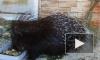 Непатриотичные дикообраз и три питона свалили из Петербурга в Самару