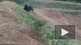 Смертельное селфи: В Индии раненый медведь растерзал ...