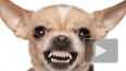 В Россиив пять раз сократилисписок опасных пород собак