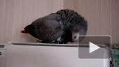 Дятел или попугай?