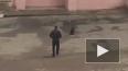 Видео из Читы: Во дворе жилого дома гулял медвежонок