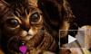 """Хозяева """"кошки-инопланетянки"""" собрали деньги на операцию и сделают ей нормальные глаза"""