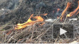 Видео: пожарная охрана ликвидировала возгорание сухой ...