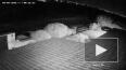 Взрыв метеорита в небе над Кипром засняли на видео