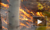 Европейскую часть России впервые ждет ранний пожароопасный сезон
