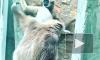 Пожар в Ленинградском зоопарке перепугал несчастных зверюшек