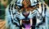 На Аскольда Запашного напал тигр. Артист оказался в больнице с рваной раной