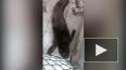 Видео: в Находке выхаживают тюлененка в угольной пыли