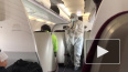 Авиаперевозчики просят отменить рекомендацию о безопасной ...