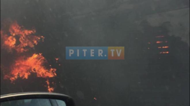 Под Пушкином сгорел пассажирский автобус