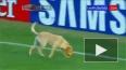 Выбежавшая на поле собака  едва не сорвала матч в ...
