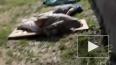 Блогеры: в Крымске при наводнении погибли более тысячи ...