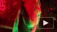 Рычащие динозавры наводят ужас на петербуржцев