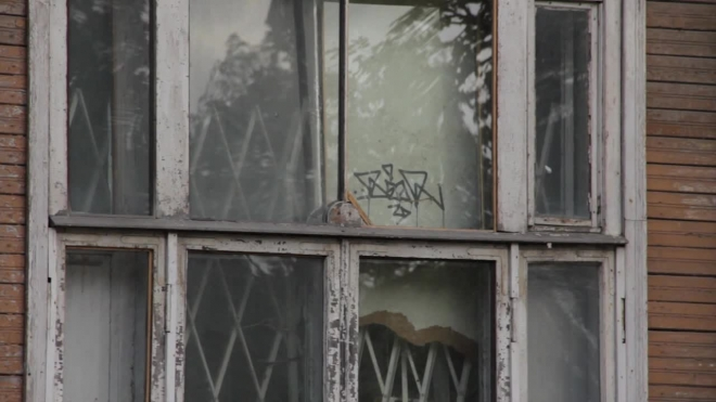 Дыхание Петербурга: новости последней недели июля