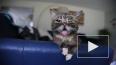 Умерла Лил Баб — знаменитая кошка с высунутым языком